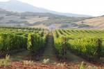 De wijngaard van Pavlidis